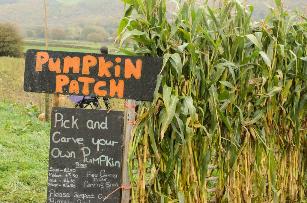Arriving at the pumpkin patch