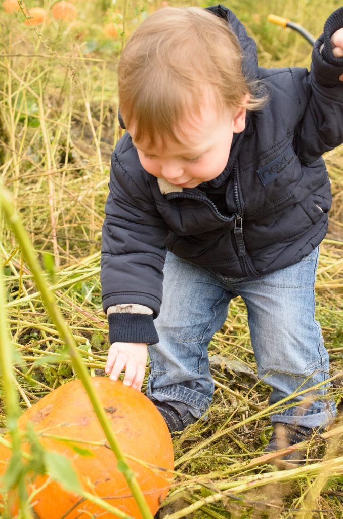 Discovering the pumpkins