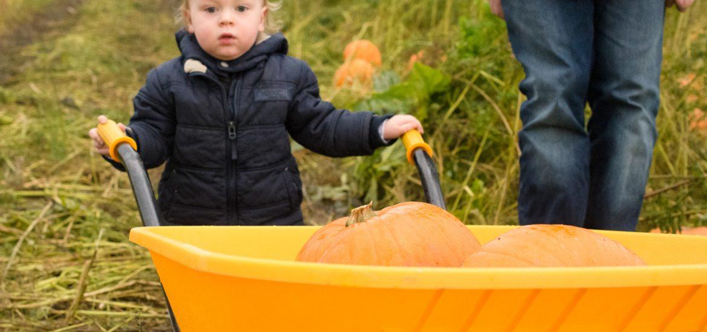 Birchfield Farm Dairies Pumpkin Festival review