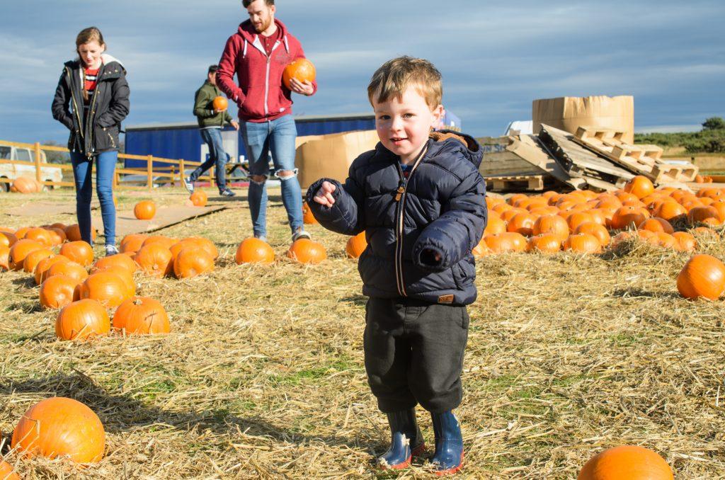 Hunting pumpkins