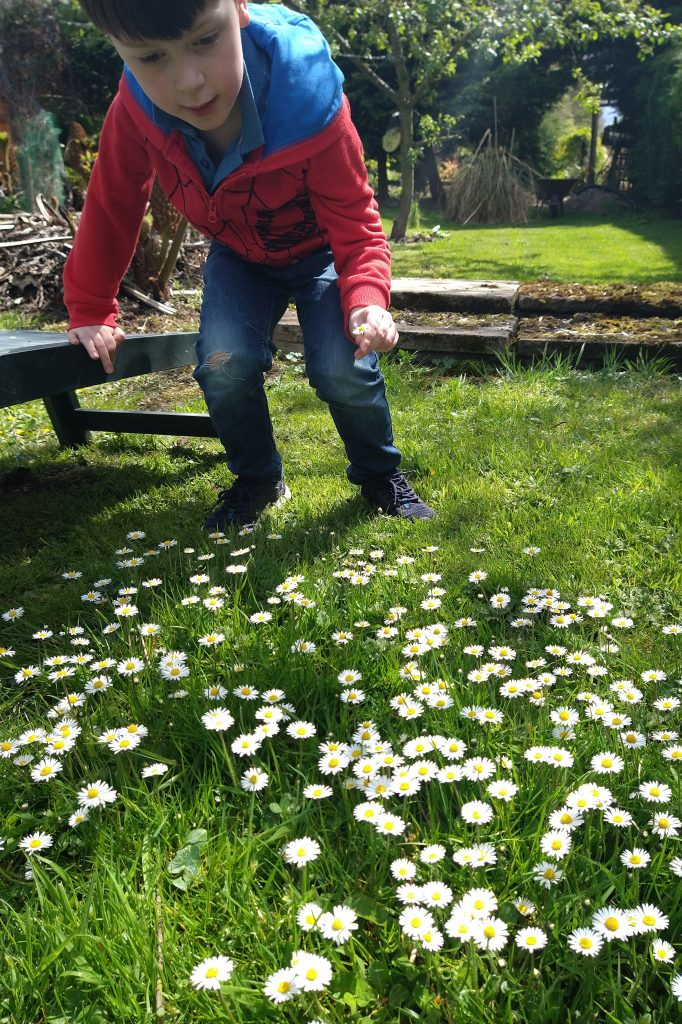 Jonah in the daisies